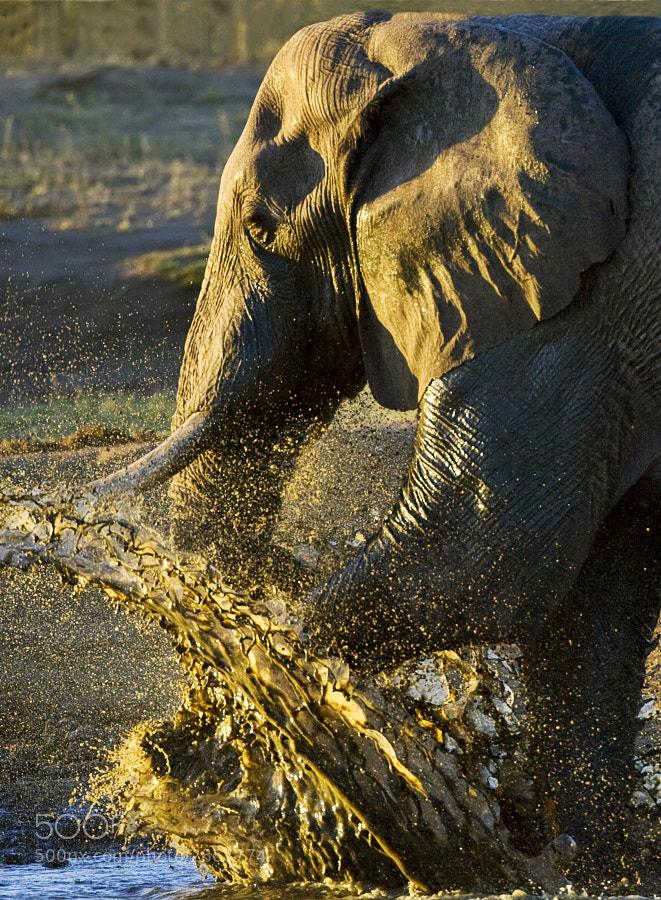 Taken at Kennedy 2 waterhole, Hwange National Park, Zimbabwe, 3rd May 2007