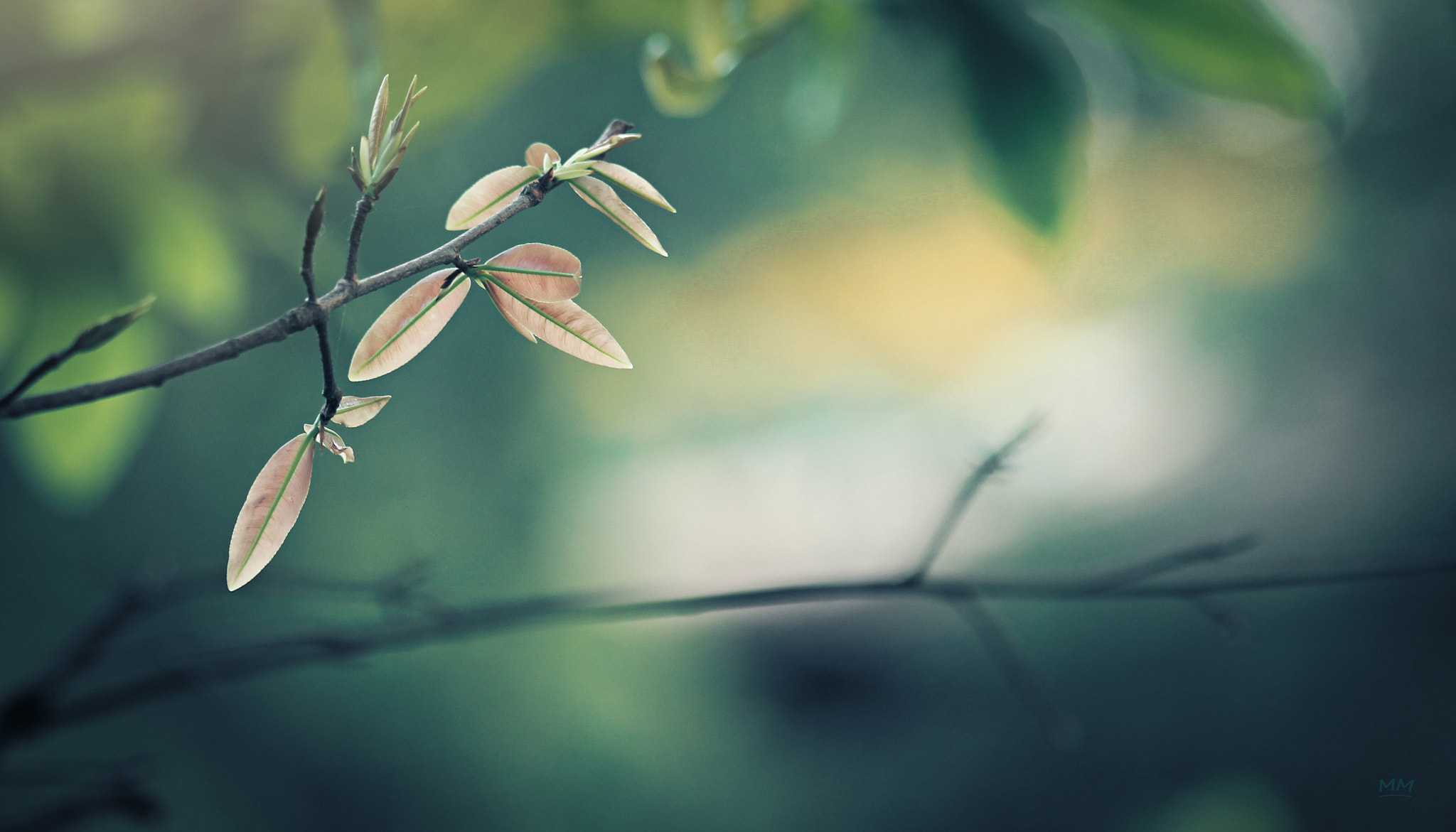 Photograph Leaves and spring. by MoMo  on 500px