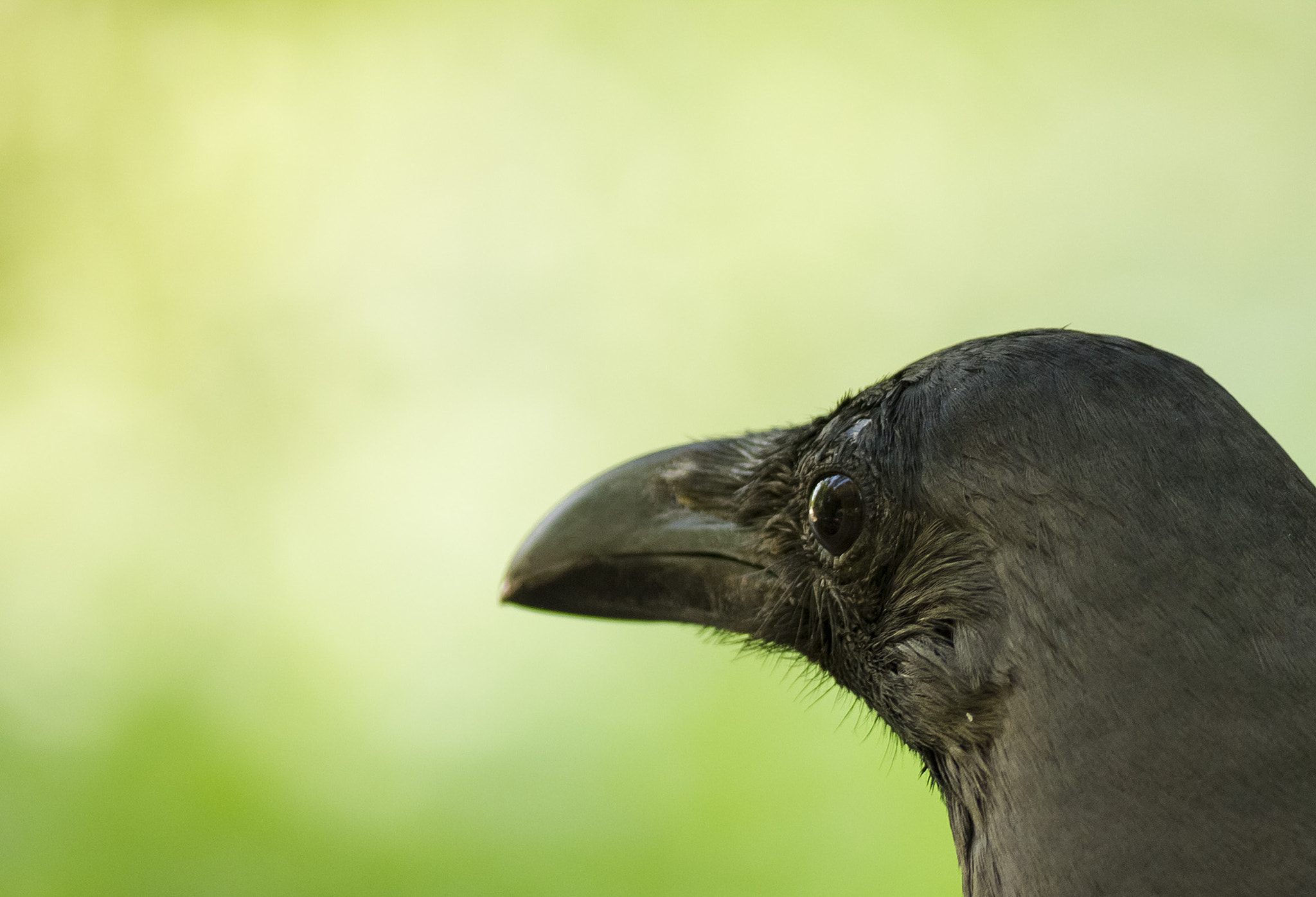 Photograph Crow eye shot by Akshay Khare on 500px