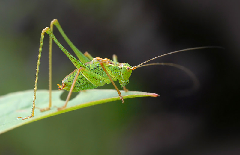Photograph Grasshopper by Stephan Jansson on 500px