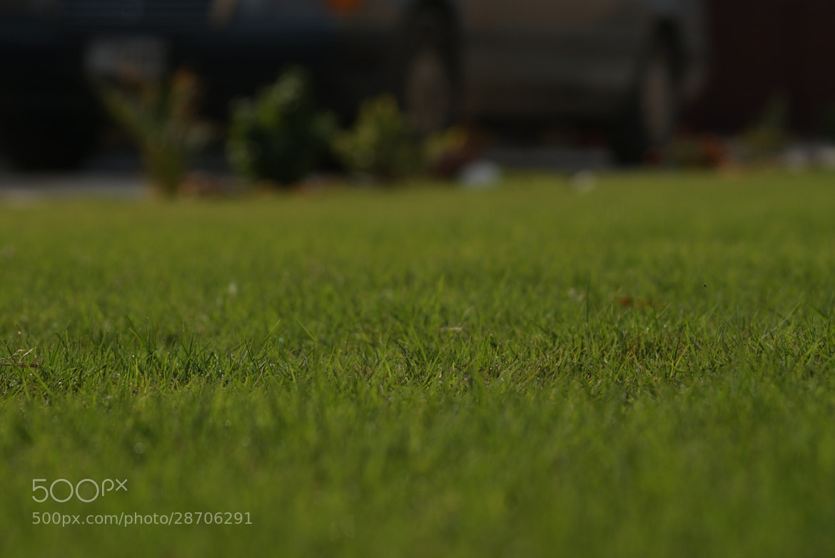 Photograph Grass by Taha Alshimaree Tj on 500px