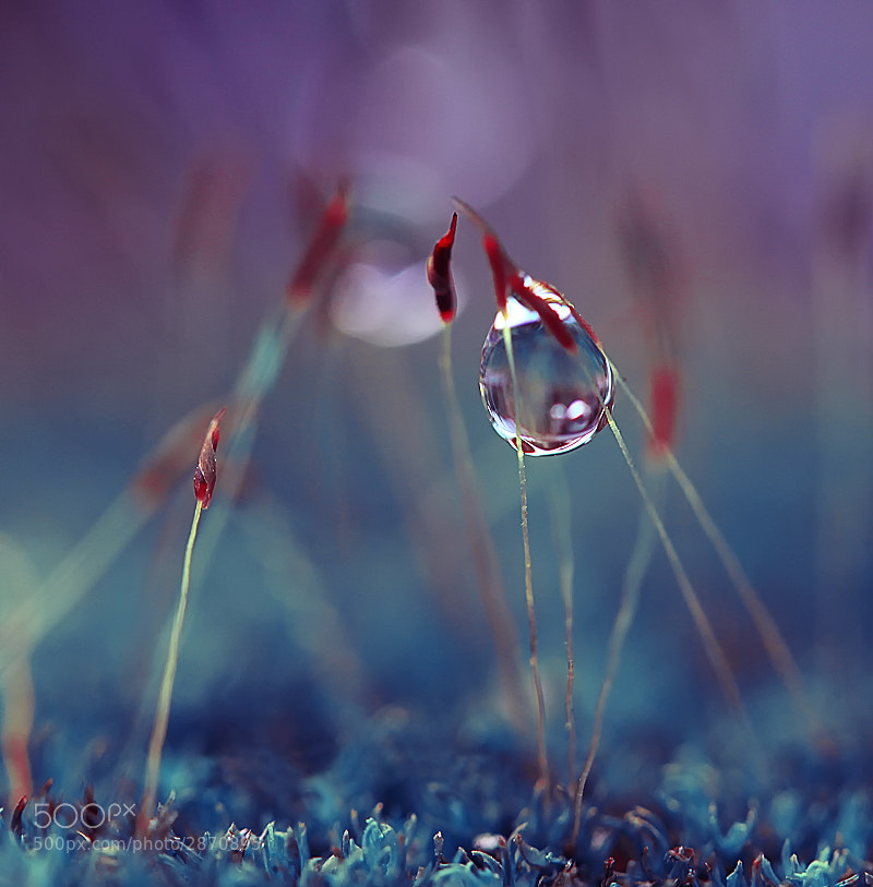 Photograph Tears by Diens Silver on 500px
