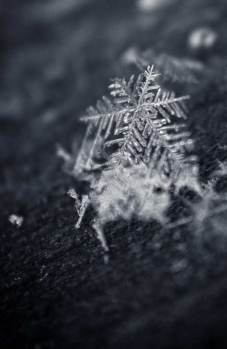 Photograph Macro Snowflake by Amber Flowers on 500px