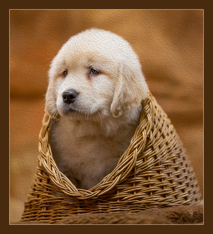 Photograph Basket Hound by Randy Brogen, Cr.Photog., CPP on 500px