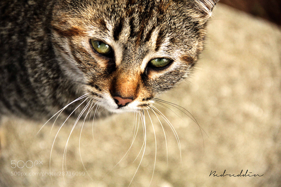 Photograph Whiskers by Bedreddin Alacaoğulları on 500px