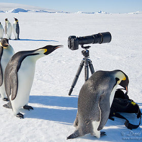 Polar Art Directors by David C. Schultz (westlight)) on 500px.com