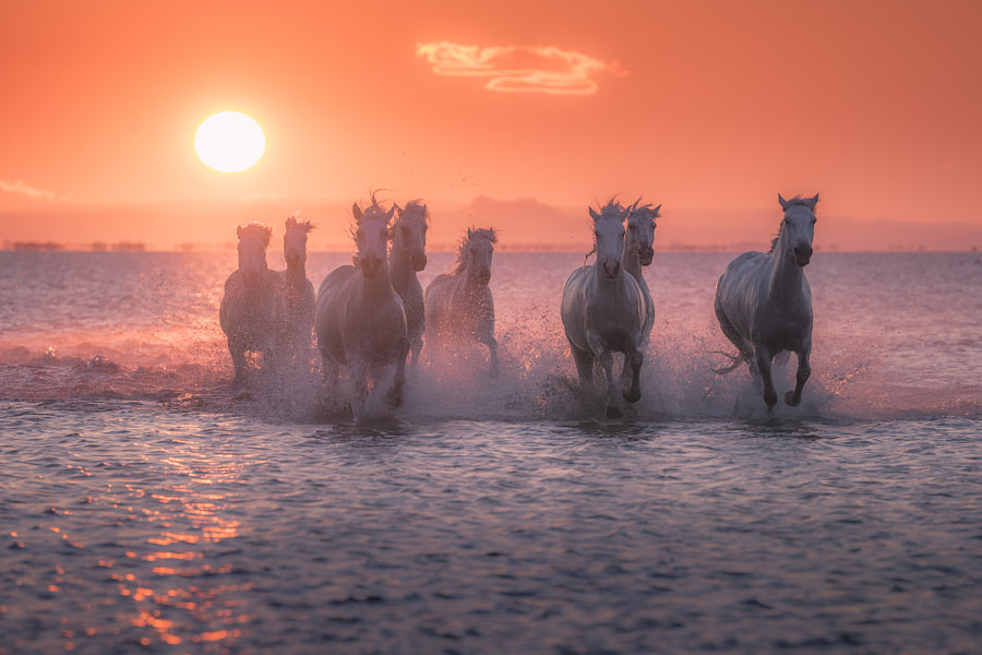 Thundering White Beauties by Iurie Belegurschi on 500px.com