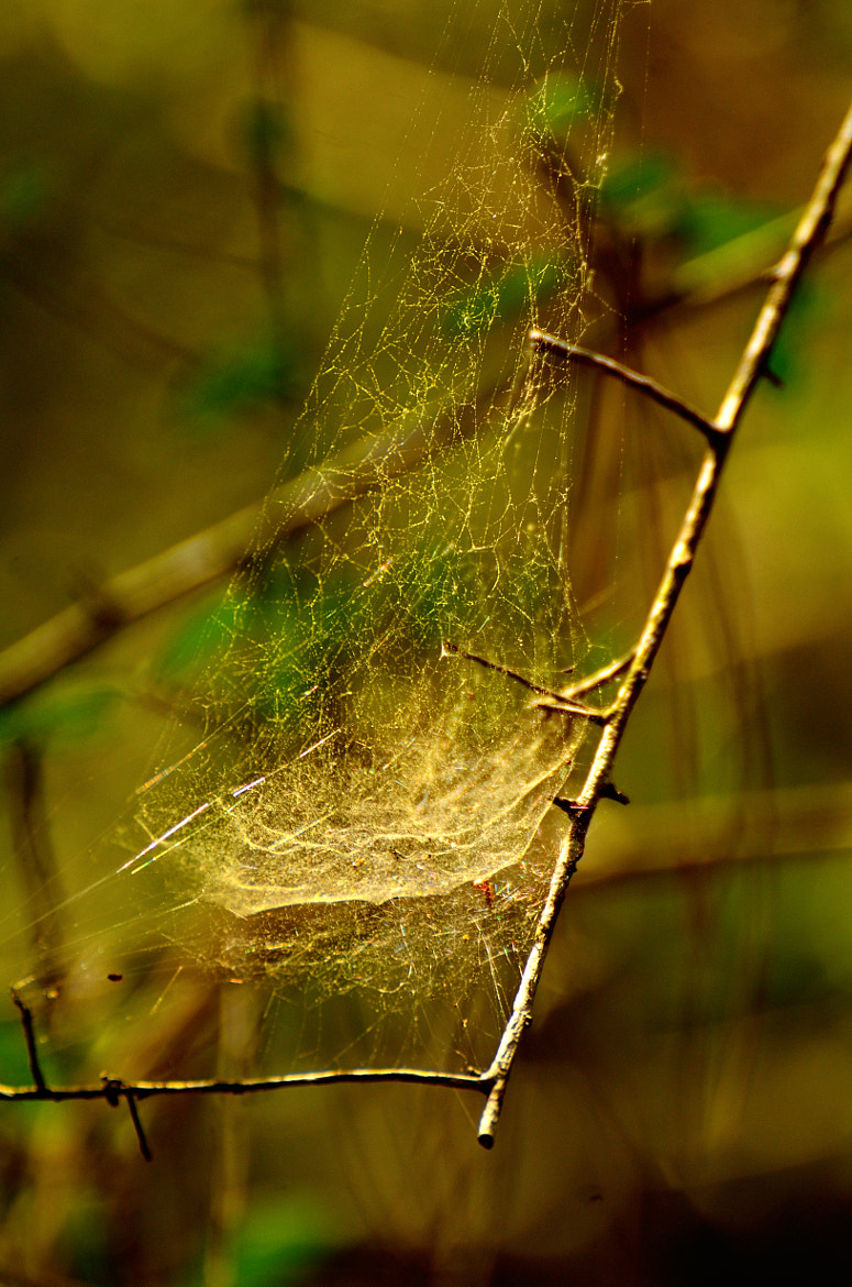 Photograph web by Manny Gonzales on 500px