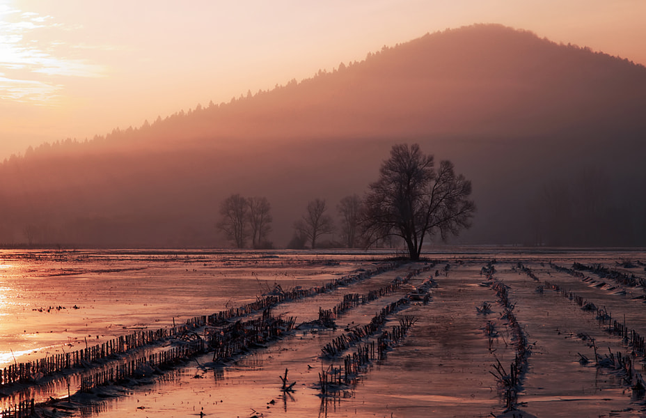 Photograph Frozen Morning Light by Luka Gorjup on 500px