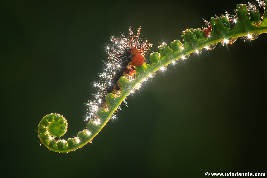 Photograph diamond in the jungle by Uda Dennie on 500px