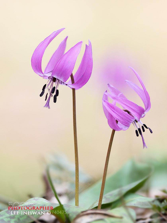 Photograph Queen of wild flower by LEE INHWAN on 500px