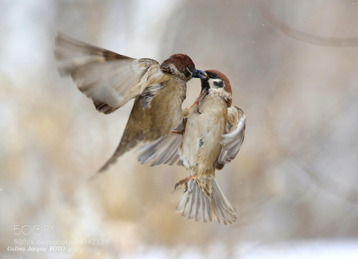Photograph Air kiss! by Galina   Jacyna on 500px