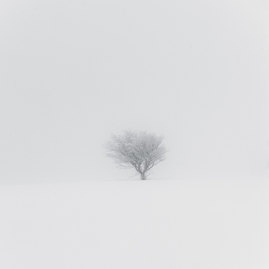 Photograph Snowy tree in the fog  by Dabid Argindar on 500px