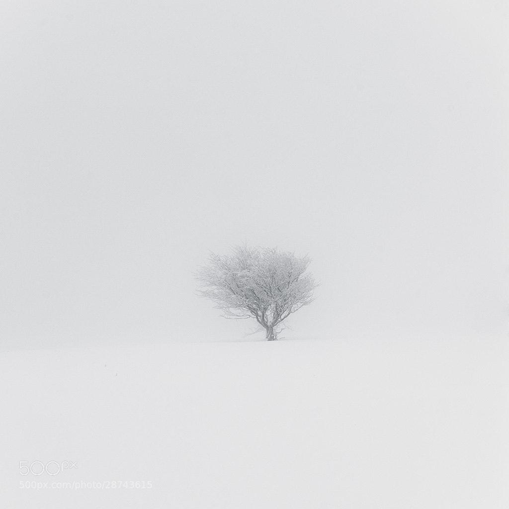 Photograph Snowy tree in the fog  by Dabid Argindar on 500px