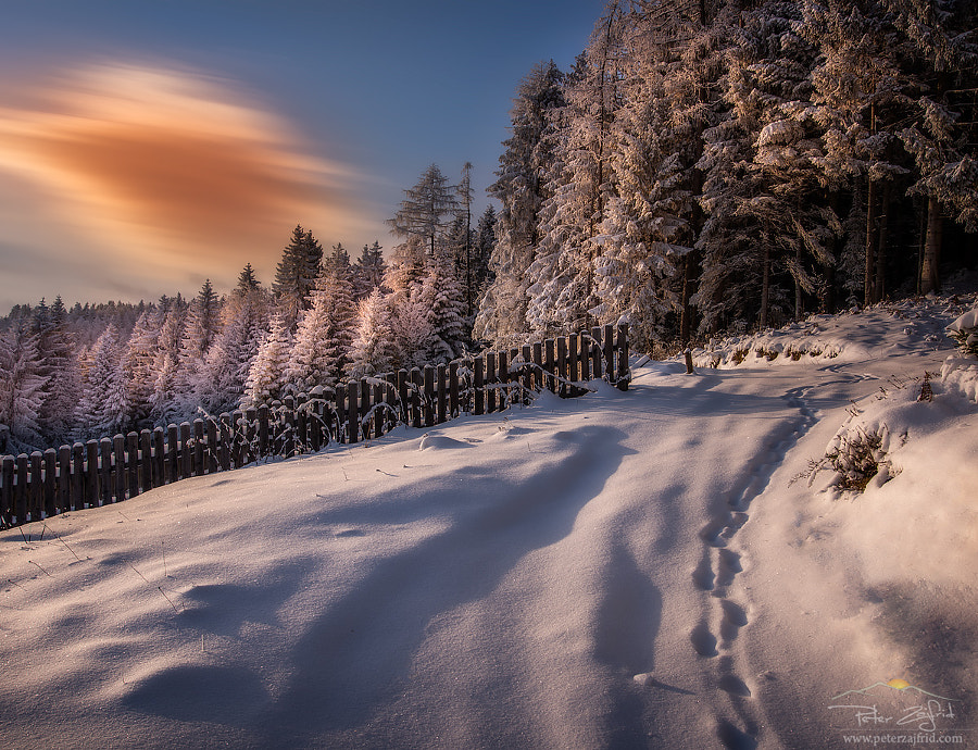 On the path by Peter Zajfrid on 500px.com