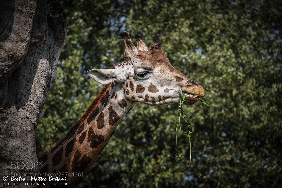 Photograph wild by Matteo Bertani - Berteo on 500px