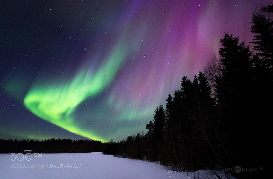 Photograph Green And Purple by Joni Niemelä on 500px
