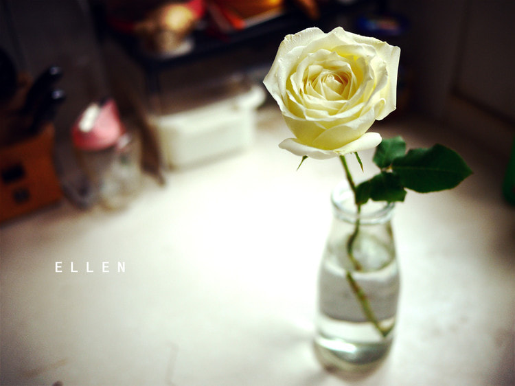 Photograph Rose — White by ellenlee on 500px