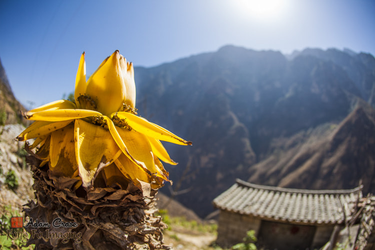 Photograph Chinese Dwarf Banana with Meili Mountain by Kung Fu Imaging on 500px