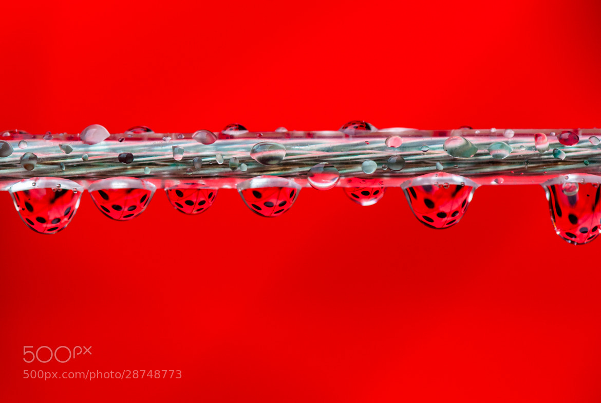 Photograph Ladybugs? by Laurens Kaldeway on 500px