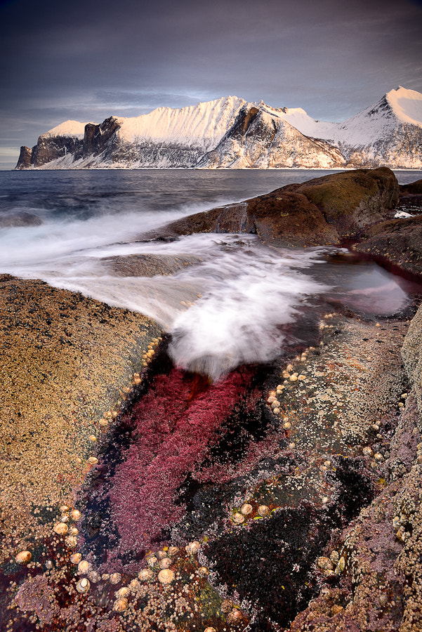 Photograph Show me your tongue! by Alexis Dubois on 500px