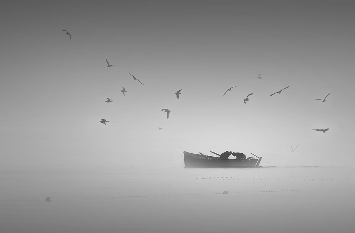 Photograph Birds in the fog by Pedro  Díaz Molins on 500px