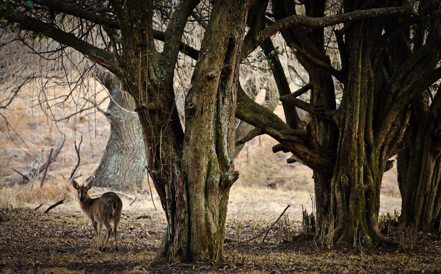 Photograph Forest Creature by Lawrence Boatwright on 500px