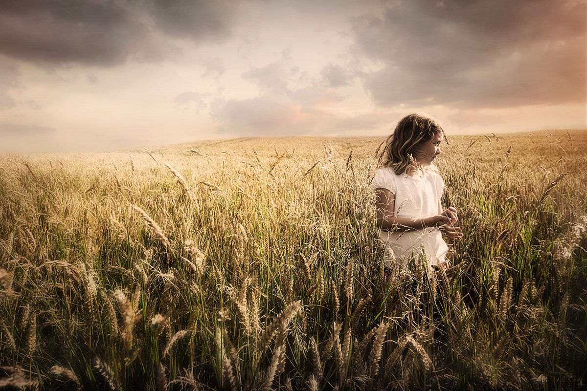 Photograph FIELDS OF GOLD by Alisdair Miller on 500px