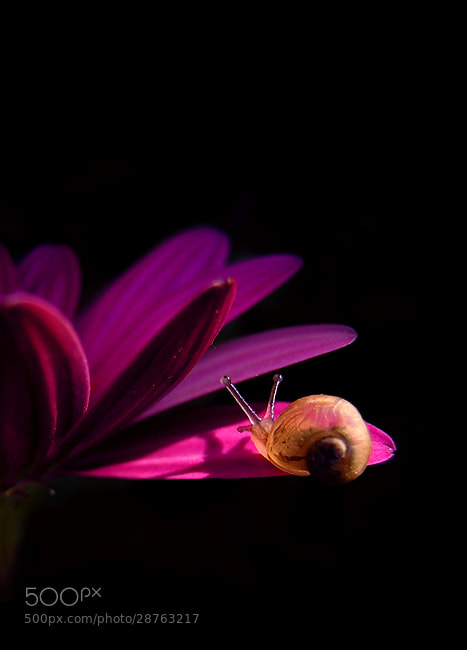 Photograph Baby Snail by Stephan Jansson on 500px