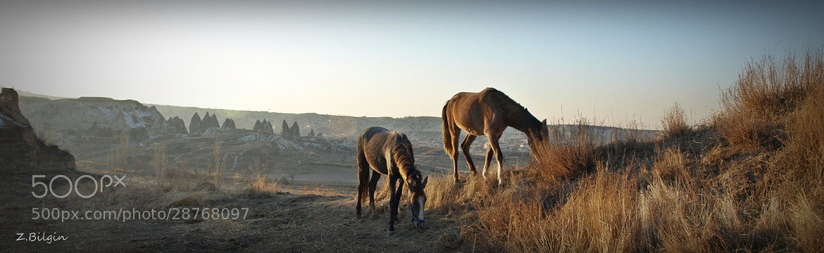 "Photograph Horses in ""Göreme""... by Zeki Bilgin on 500px"