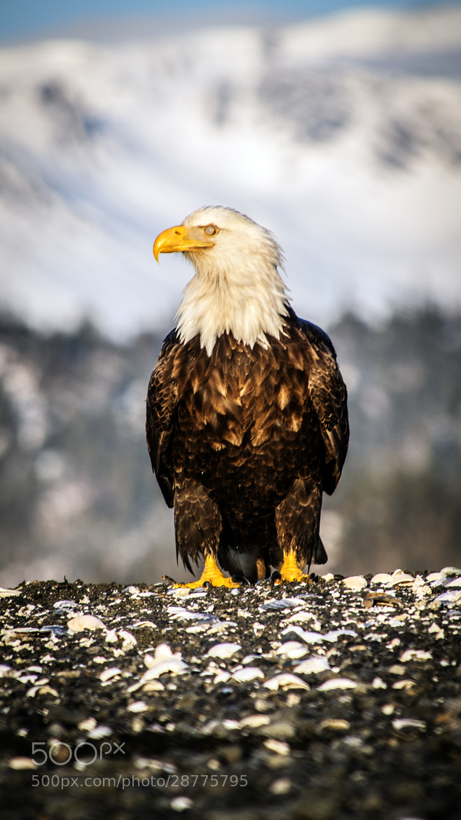 Photograph Mountain Sentry by Richard Harrington on 500px
