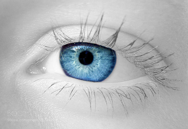 Photograph Baby Blue Eyes by Stephan Jansson on 500px
