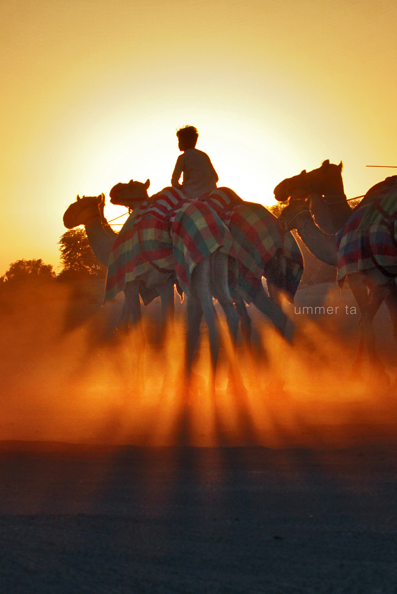 Photograph Camel Rider by Artist Ummer Ta  on 500px