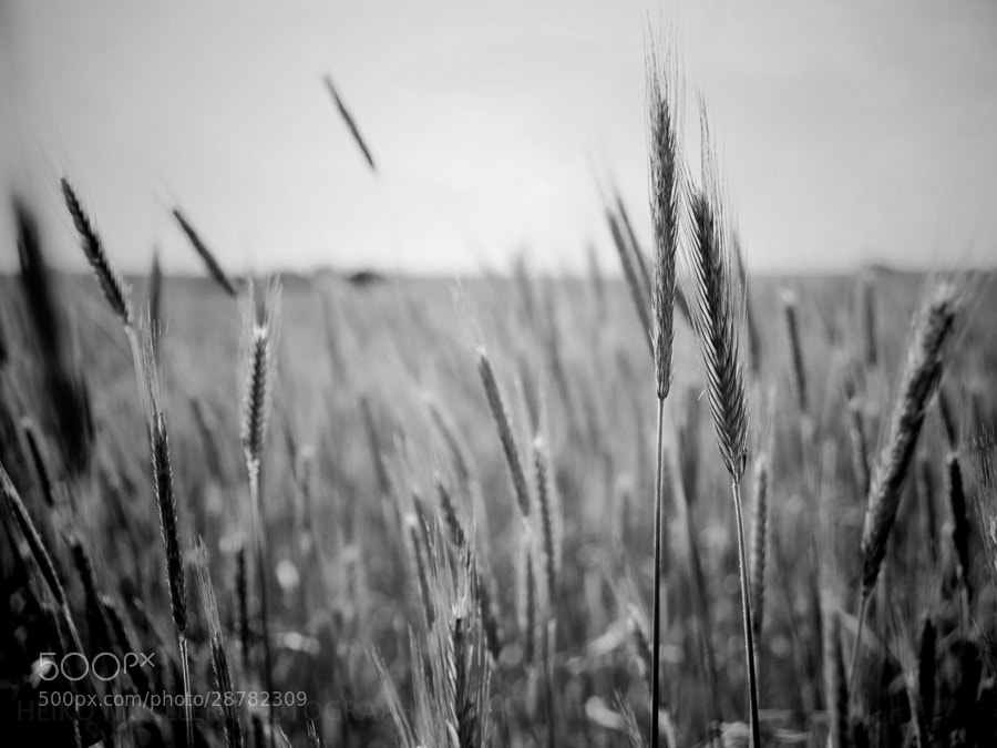 Photograph Grain by Heiko Mueller on 500px