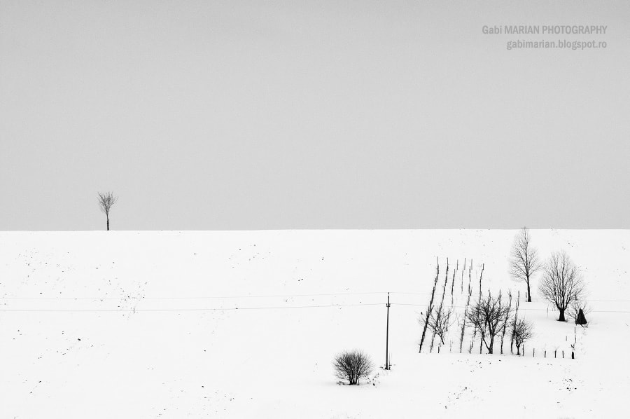 Photograph Simplicity by MARIAN Gabriel Constantin on 500px
