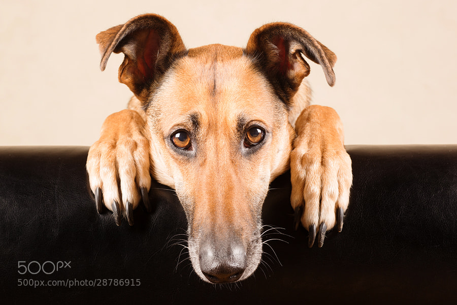 Photograph --o^°U°^o-- by Elke Vogelsang on 500px