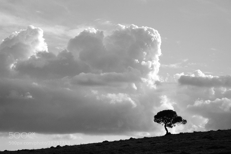 Photograph Lonely by Laura Herrera Ramirez  on 500px