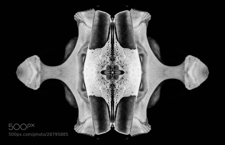 Photograph Rorschach 2 by Jaron Arboleda on 500px