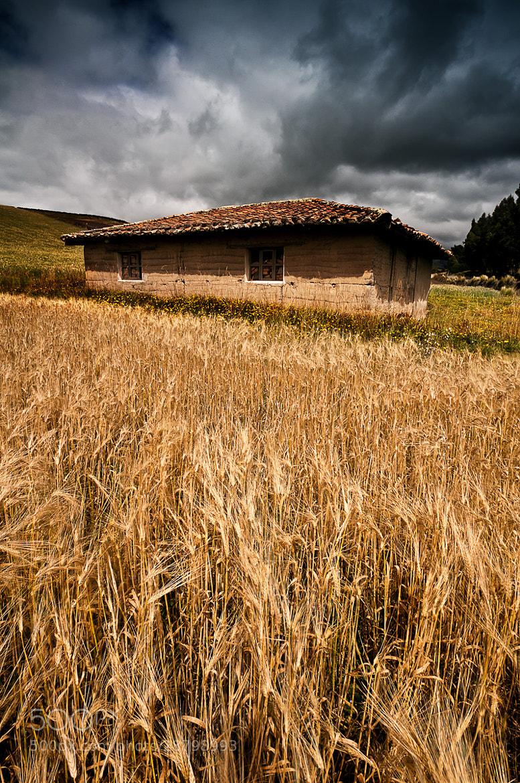 Photograph Gold field by Fernando Salas on 500px