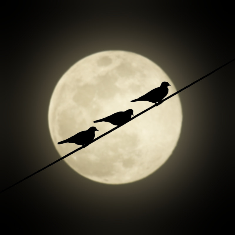 Photograph Moon and Birds by Carlos Gotay on 500px