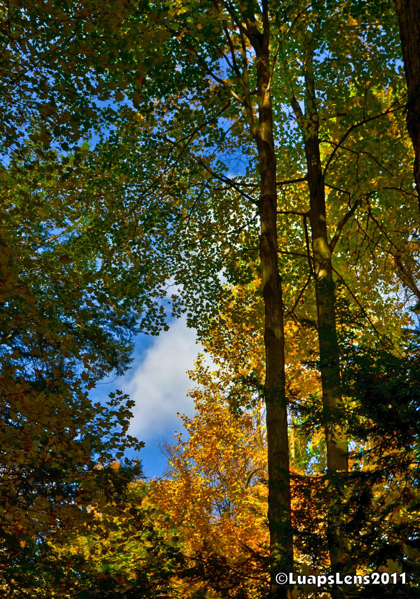 Photograph A hole in the canopy by Luaps Lens on 500px