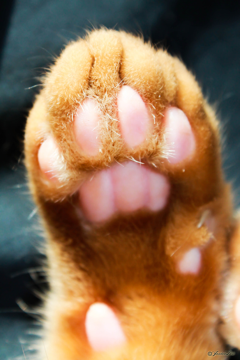 Photograph HI PAW! by Jessica Bate on 500px