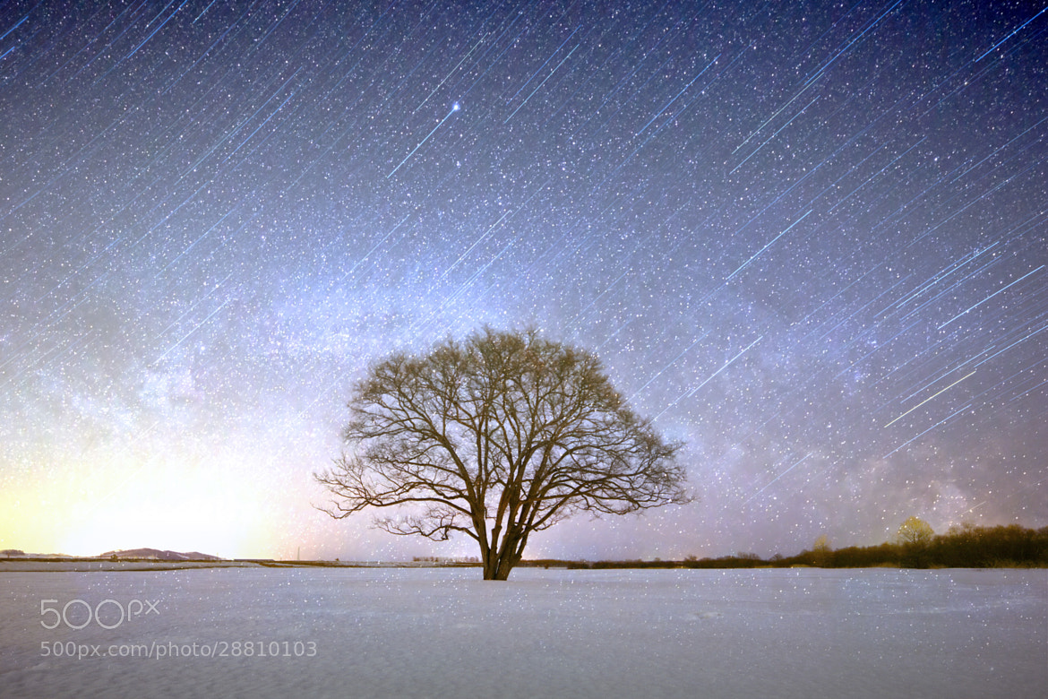 Photograph Yggdrasil by hirosima munetaka on 500px