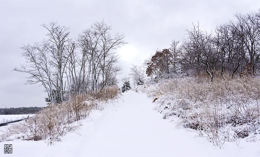 Photograph Winter Wonderland by Ming Gullo on 500px