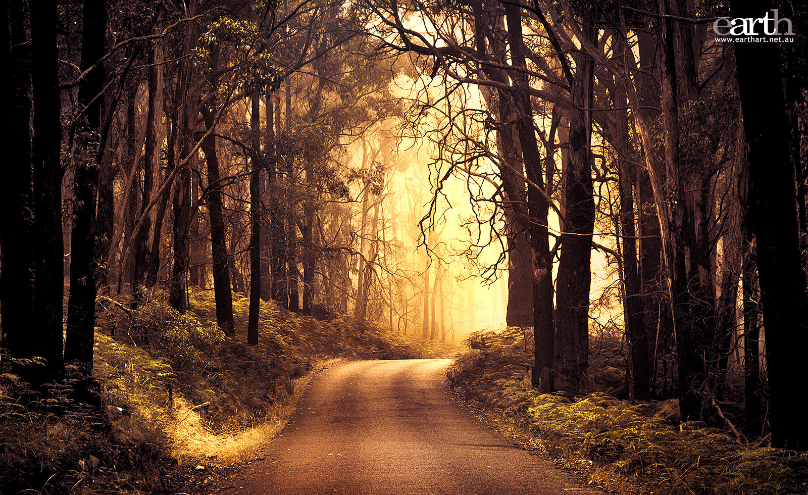 Photograph Golden Path by Ben Goode on 500px