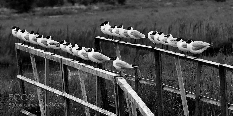 Photograph .... by ronnin bird on 500px