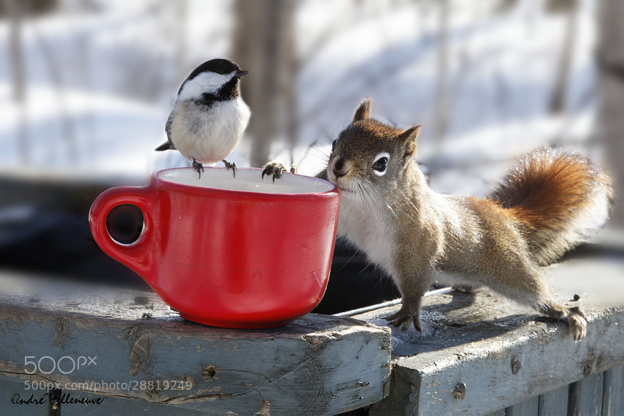 Photograph Now, that is the spring ! by Andre Villeneuve on 500px