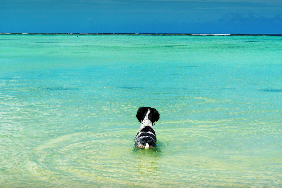 Black and White Dog in the Water in Guam by Rich Cruse on 500px.com