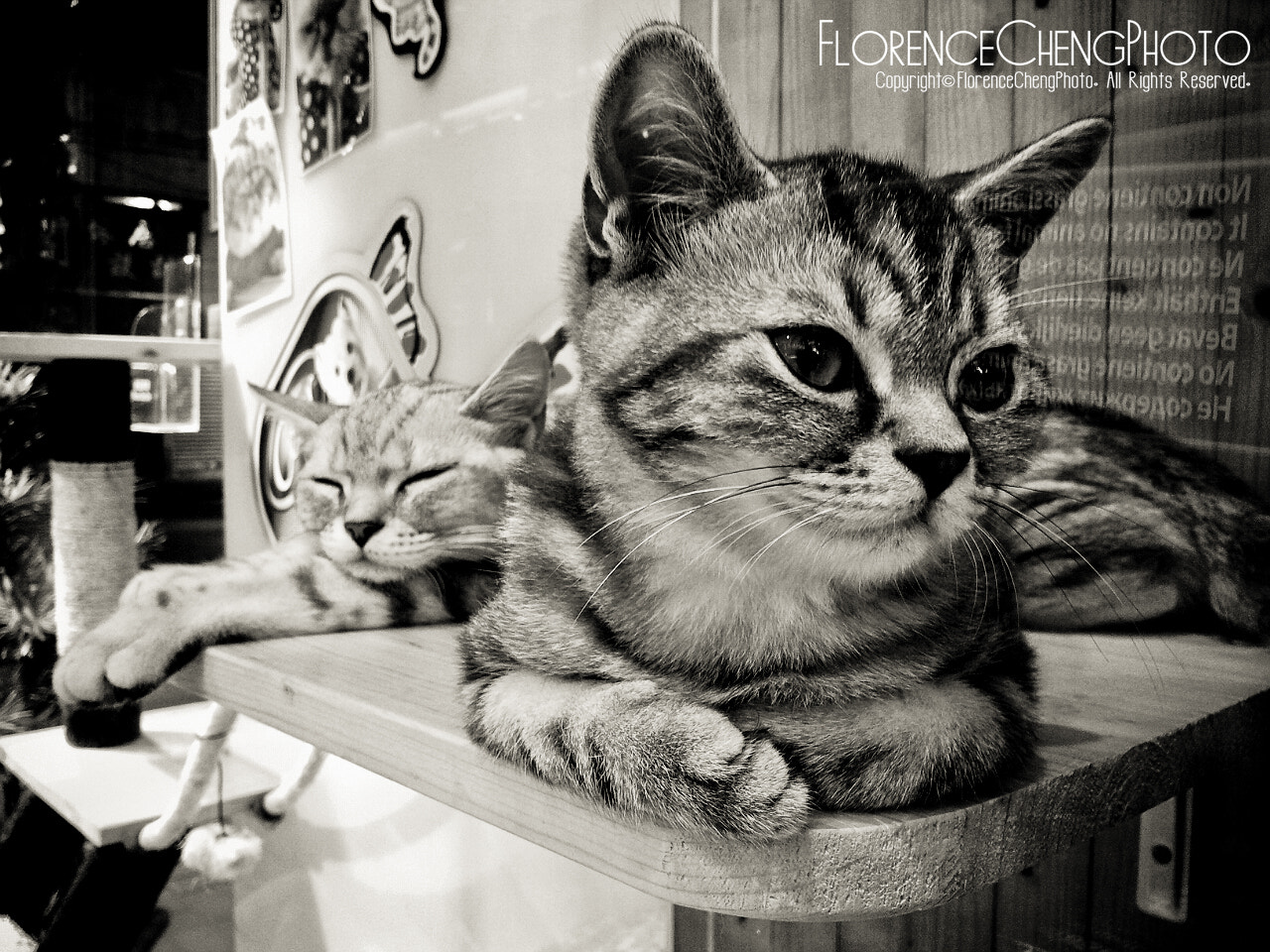 Photograph Lazy vs Sedulous by Florence Cheng on 500px