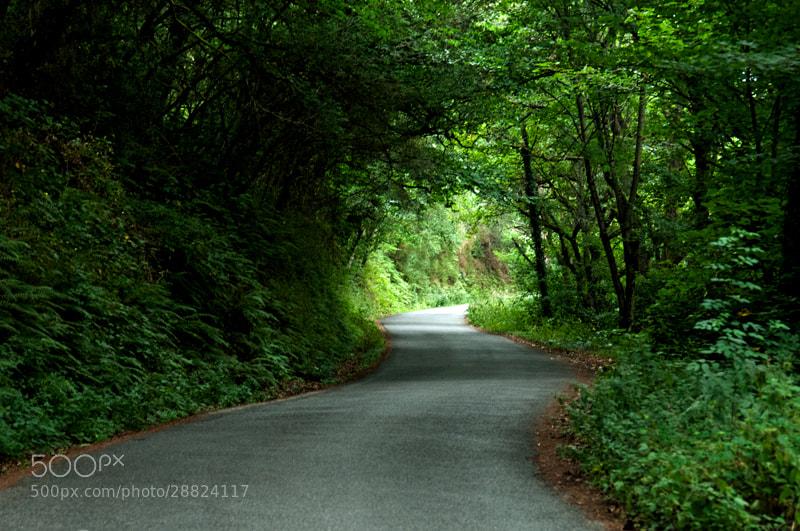 Camino de Santiago 2012  Triacastela - Samos  _______________________________  La etapa de hoy es corta, pero considero que por Samos y Su Monasterio no se puede pasar a si como así, para mi es uno de lugares MITICOS del Camino,   Lo que no me gusta es que a la salida de Triacastela, todos los indicadores que indican la dirección Samos están borrados, tachados o incluso alguno parece como quemado,   Conozco las diferencias podemos decir históricas entre los dos lugares, pero la verdad es que no las entiendo ni las entenderé nunca.   Me imagino a un peregrino de otra nacionalidad o incluso español con poca información que al ver eso no se va por Samos ni de broma.   Otra cosa que no me gusta, son los dos o tres Km. que se tienen que andar por la carretera,   Creo que alguien con conocimientos del terreno en la zona y con autoridad para poderlo hacer, tendría que marcar una ruta para evitar ese tramo de carretera.   Pero la verdad es que cuando dejamos la carretera, entramos en un verdadero túnel verde, una maravilla de tramo unos de los más bonitos del Camino sin duda.   Encuentro a un Sr. Mayor con su esposa y su hija (franceses) que venían también de San Juan PP y que no había visto antes y que estaban maravillados con la belleza de la etapa   También un grupo de jóvenes muy numerosos, con sus cánticos y su alegría que hacían una marcha de la Asociación Próvida,   En Samos me quedo dos días, el primero duermo en el Albergue y el segundo en la Hospedería del monasterio.   Conozco a los monjes pues he estado de Hospitalero en dos ocasiones y es por eso que me permiten quedarme una noche en el Monasterio, lo cual agradezco públicamente y me permite una vez mas la visita guiada al Claustro, los cantos gregorianos de las 19, 30, la misa del peregrino de las 20 horas, bueno para que contar, una maravilla.   Por lo tanto tengo muchas fotos, que divido en tres grupos,   El Claustro,  El Jardín del Monasterio, y  El Entorno de Samos, que ya iré mostrando